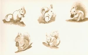 scoiattoli 2