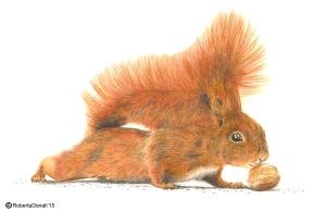scoiattolo web